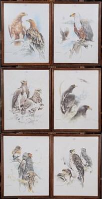Lot 1077 - A set of six oak framed prints depicting birds of prey (6)