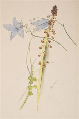 Lot 2049 - Ithell Colquhoun (1906-1988) Flower study Signed and dated (19)33, pencil and watercolour,...