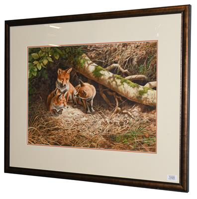 Lot 1020 - Adrian Rigby (Contemporary) Foxes sheltering  Signed, gouache, 41cm by 58.5cm  Artist's Resale...