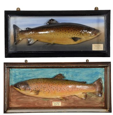 Lot 3 - Taxidermy: A Cased Brown Trout (Salmo trutta), dated 09th July 1948, in the manner of P.D. Malloch