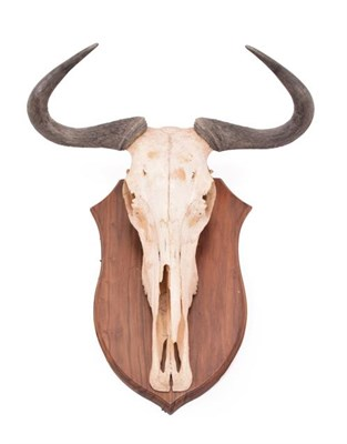 Lot 4 - Horns/Hides: A Small Collection of African Hides and Skull, modern, comprising -  adult Blue...