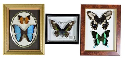 Lot 14 - Entomology: Three Framed Tropical Butterflies, circa late 20th century, a small collection of 5...