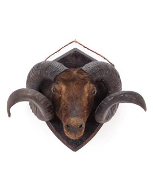 Lot 25 - Taxidermy: A Group of Late Victorian Trophy Heads and Antlers, comprising a Rams head on shield...
