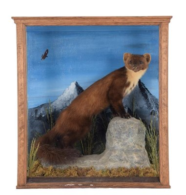 Lot 35 - Taxidermy: A Cased Pine Marten & Late Victorian Cased Otter, a full mount adult Pine Marten...