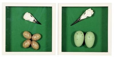 Lot 38 - Skulls/Anatomy: A Pair of Framed Corvid and Wading Bird Skulls, modern, a framed Raven skull...