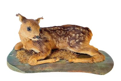 Lot 39 - Taxidermy: A Fallow Deer Fawn (Dama dama), circa late 20th century, a full mount fawn in...