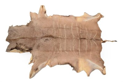 Lot 41 - Hides /Skins: A Collection Of European & African Game Trophy Skins, circa late 20th century,...