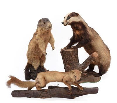 Lot 48 - Taxidermy: A Collection of Countryside Animals, circa late 20th century, comprising - European...