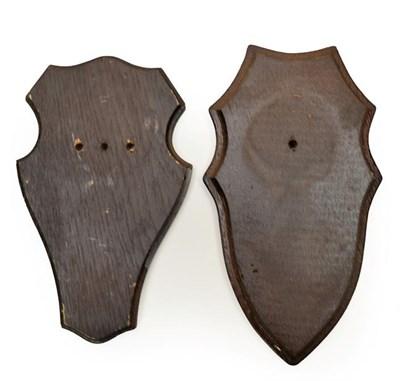 Lot 66 - Taxidermy: Shields, thirty three similar dark oak shields, various sizes - average 11cm by...
