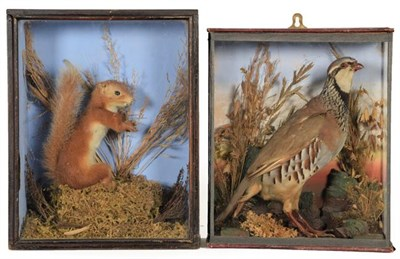 Lot 68 - Taxidermy: A Cased French Partridge and Red Squirrel, circa early 20th century, a full mount...