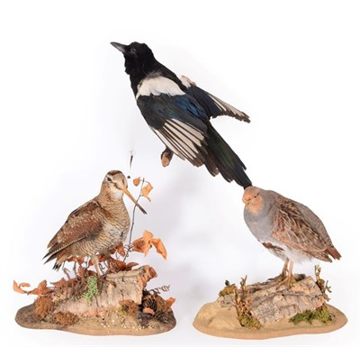 Lot 69 - Taxidermy:  A Collection of Countryside Birds, modern, a full mount adult Woodcock standing...