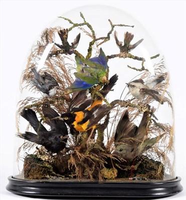 Lot 73 - Taxidermy: A Victorian Diorama of Tropical Birds, circa 1880-1900, a collection of eight...