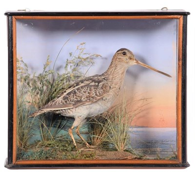 Lot 85 - Taxidermy: A Cased Common Snipe (Gallinago gallinago), dated 26th December 1899, by Small & Son, 38
