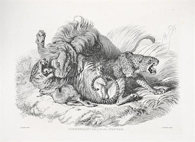 Lot 56 - Landseer (Edwin). Engravings of Lions, Tigers, Panthers, Leopards, Dogs, etc., chiefly after...