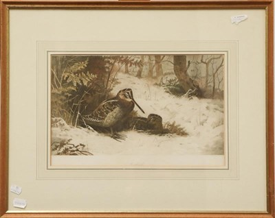 Lot 1048 - A large collection of sporting signed prints to include Archibald Thorburn and Lionel Edwards,...