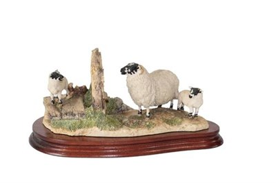 Lot 95 - Border Fine Arts 'Wrong Side of the Fence' (Ewe and lambs), model No. JH100 by Anne Wall,...